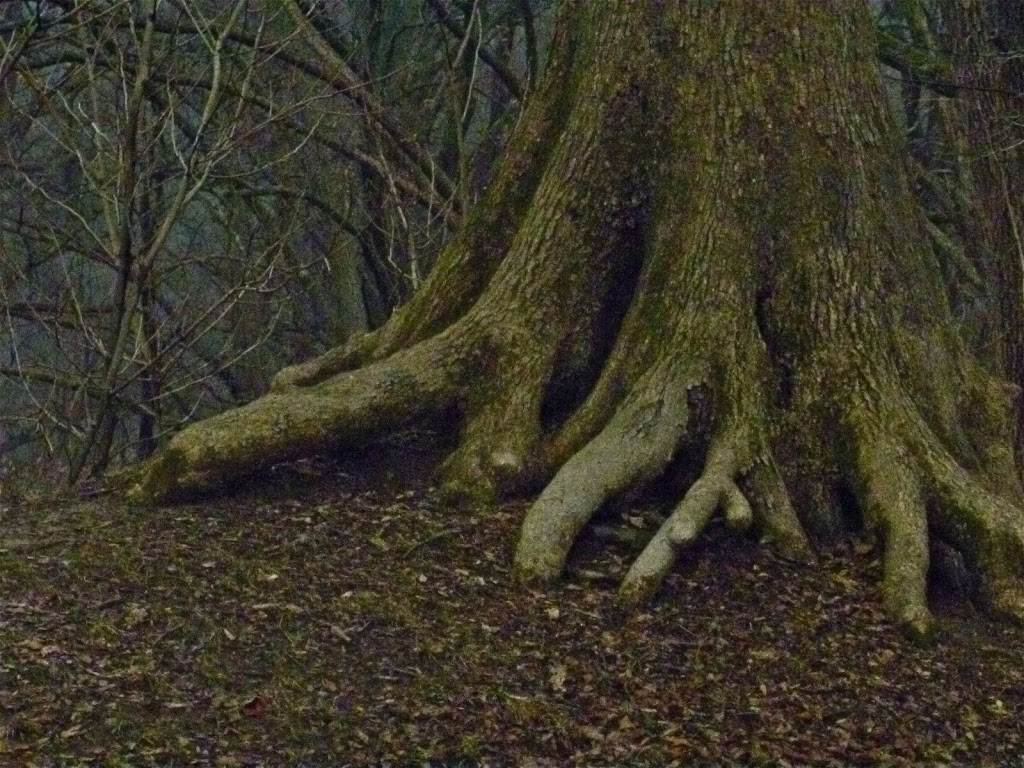 Fort-Kaskaskia-Tree-roots