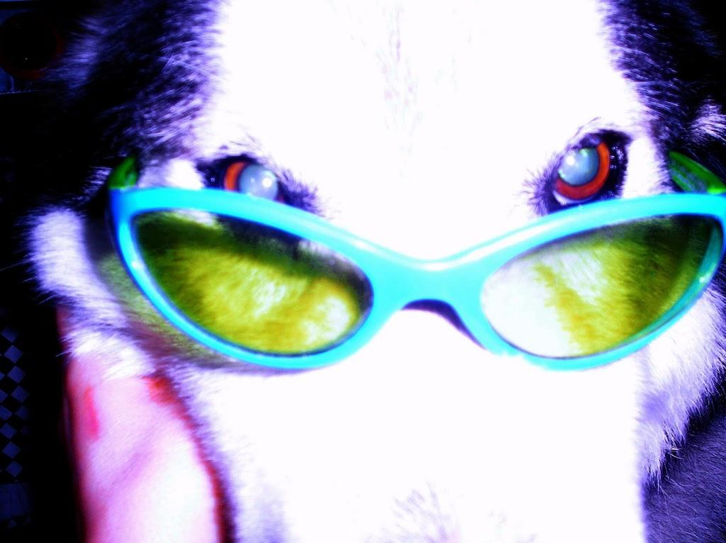 Cooper_Glasses
