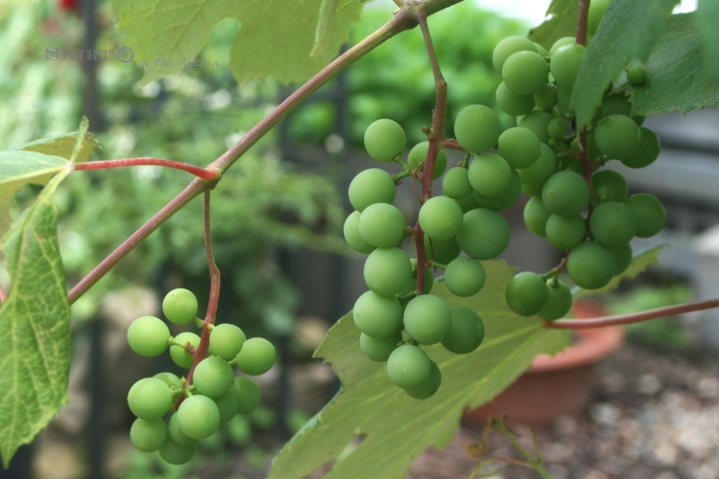 IMG_9757 grape clusters.jpg