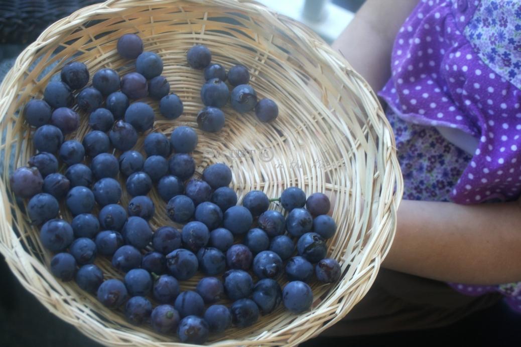 IMG_1268 grapes