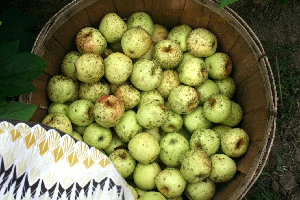 IMG_1717 apples