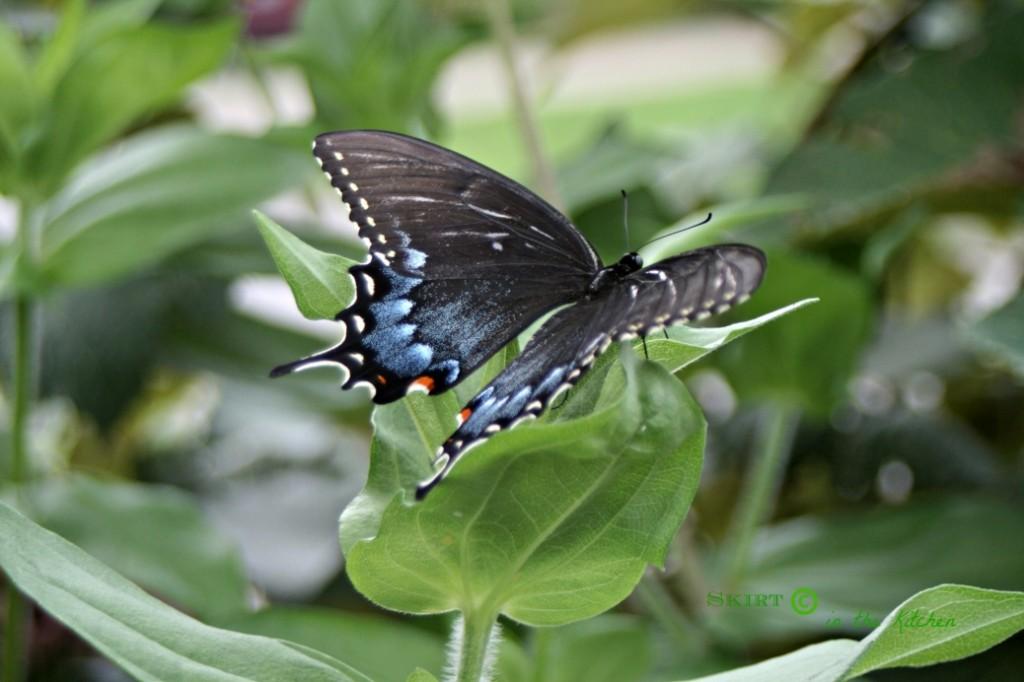 Flower Power & Butterfly Beauty