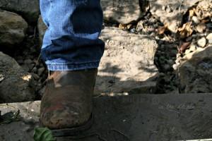 Heel Planting for Winter