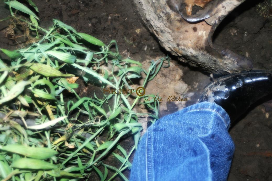 IMG_3738 Heel Planting