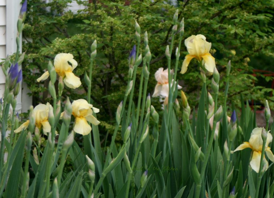 IMG_7593 Spring Awakening