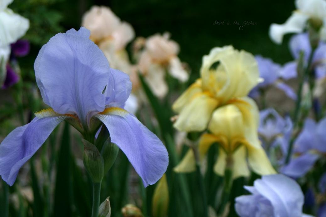 IMG_7707 Spring Awakening