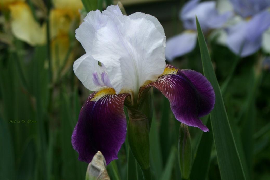 IMG_7717 Spring Awakening