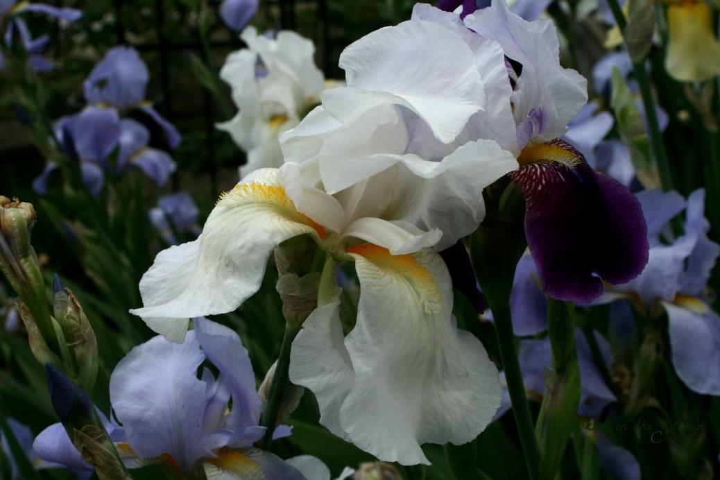 IMG_7718 Spring Awakening