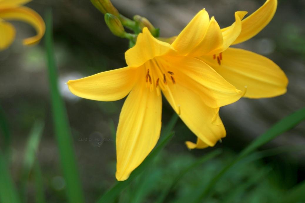 IMG_7749 Spring Awakening
