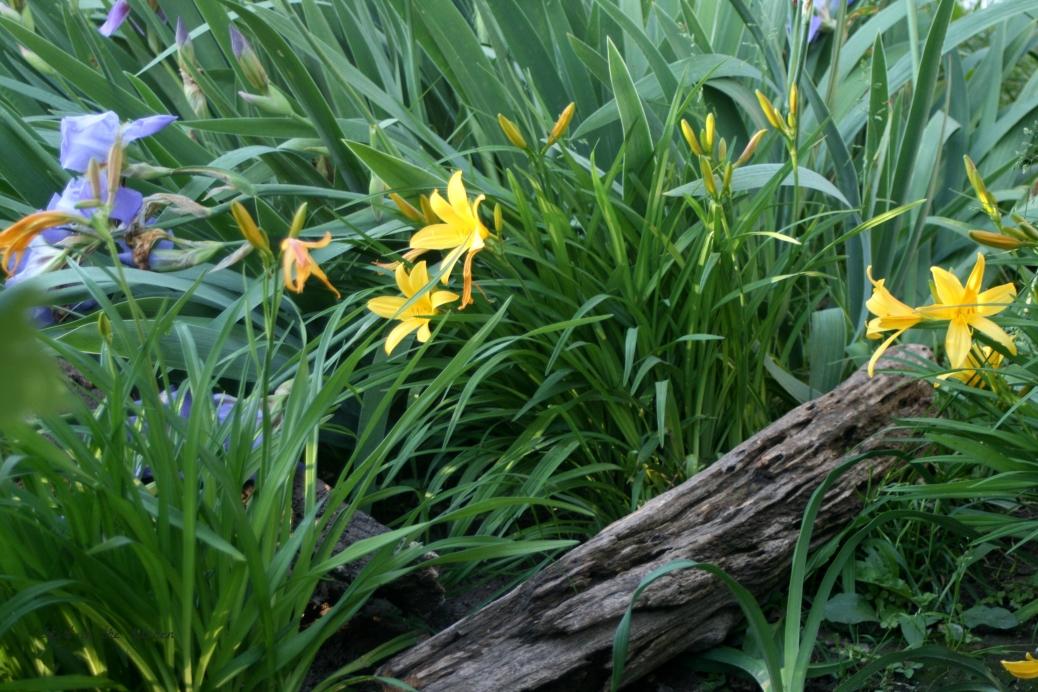 IMG_7761 Spring Awakening