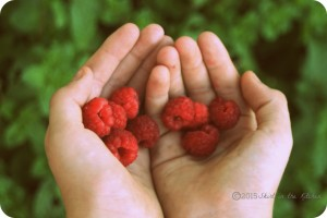 Fruitful Summer