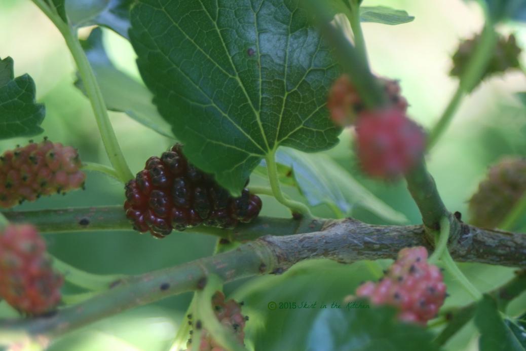 IMG_7988 Fruitful Summer