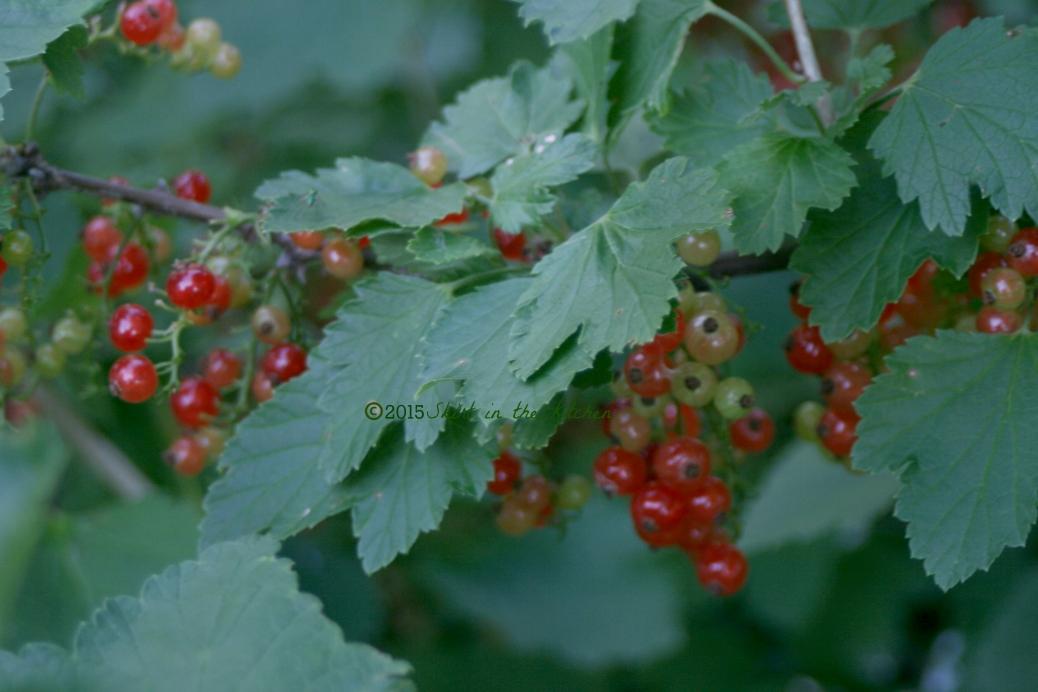 IMG_7989 Fruitful Summer