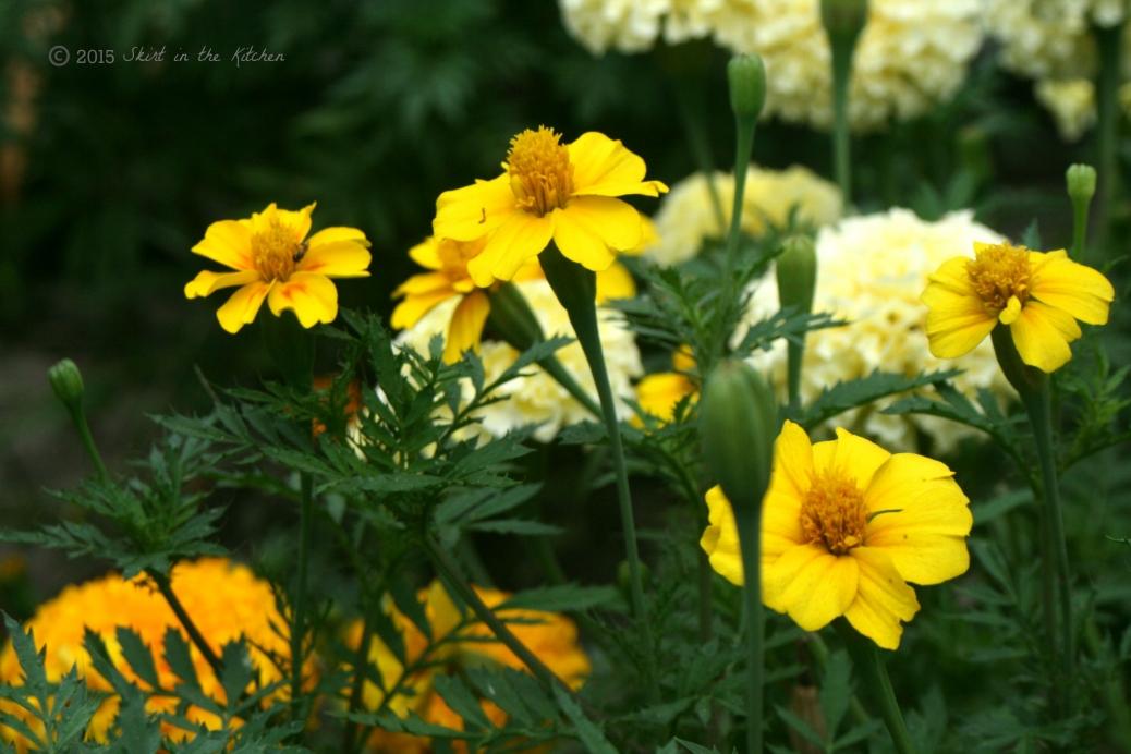 IMG_8625 Summer Days
