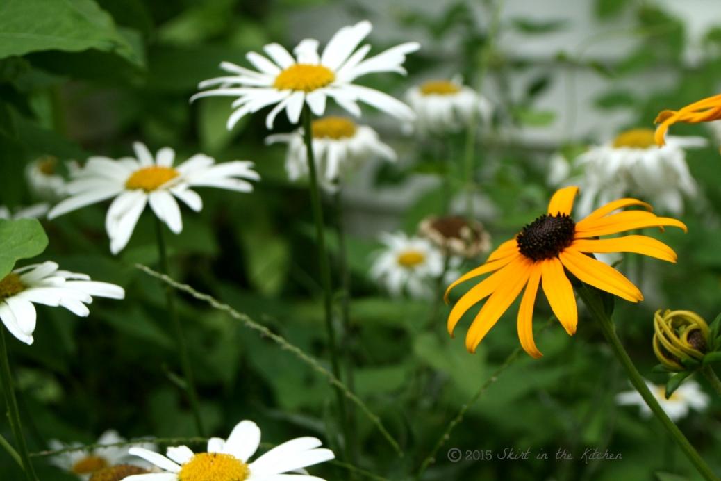 IMG_8632 Summer Days