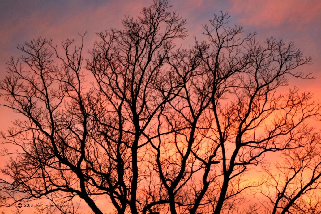 IMG_1186 evening sunset